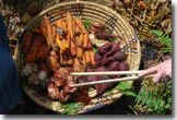 root veggies in basket