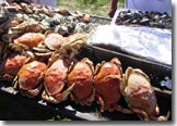 Dungeness crab and seafood barbecue